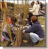 Girls making a willow fence